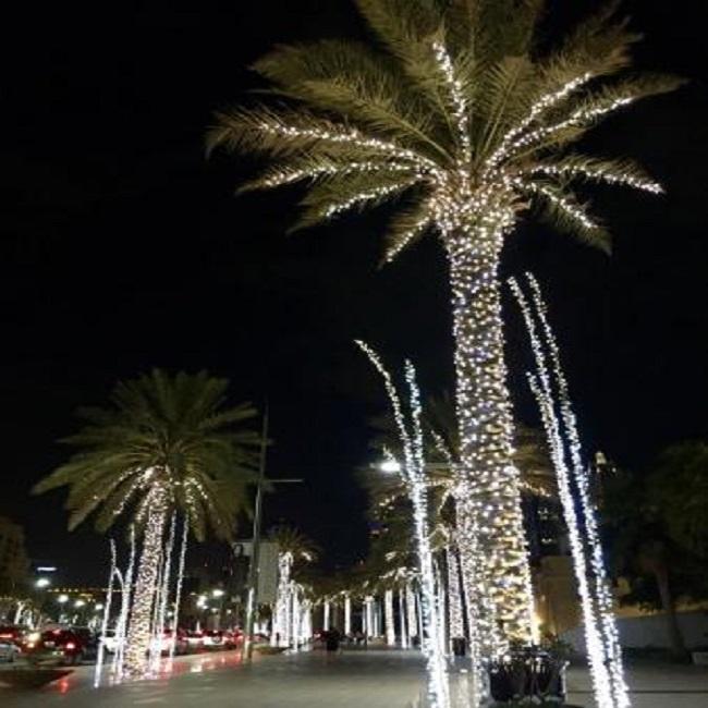 beautiful-palm-trees