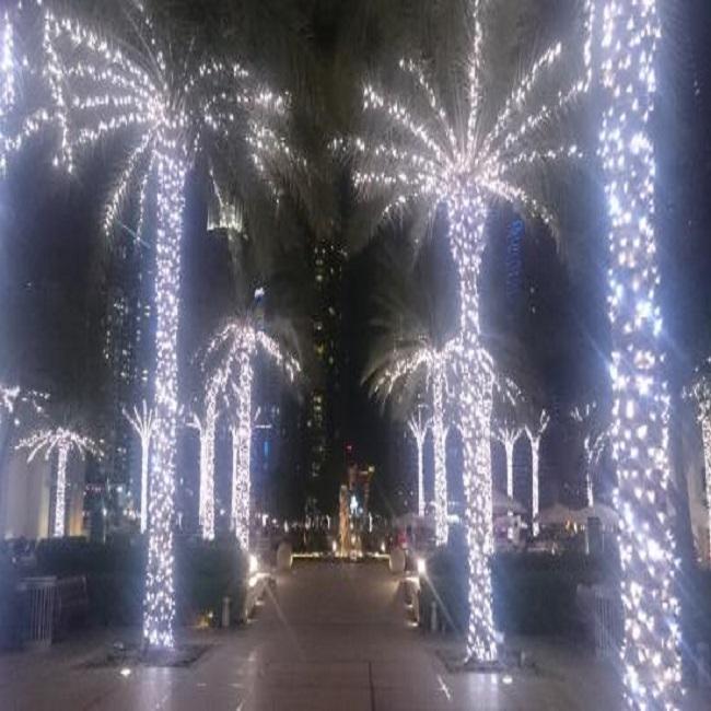 lit-up-palm-trees